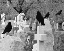 angels-among-us-gothic-and-crows-art-photography