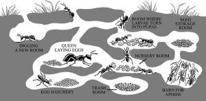 Ant-Farm