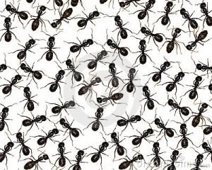 Ants-300x240